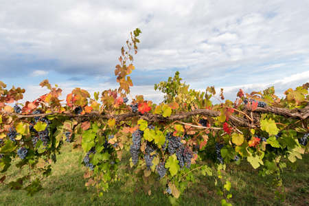 colorful branch of a vineyard that stretches skyward