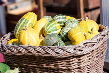 basket of vegetables with autumn colors Stock Photo
