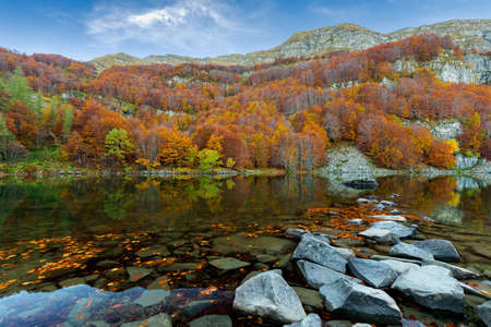 the forest full of colors reflected in lake Stock Photo