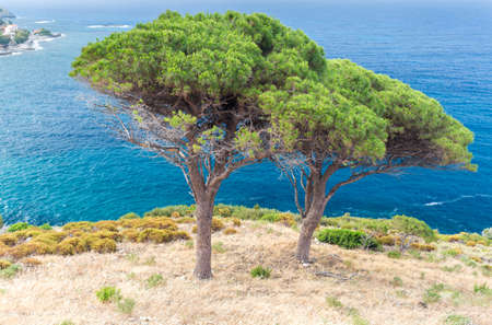 overhanging trees on the coast