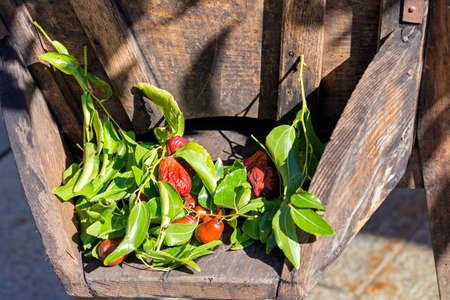 small tomatoes laid on an old wooden wheelbarrow Stock Photo