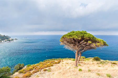 two trees watching the view from the cliff Stock Photo