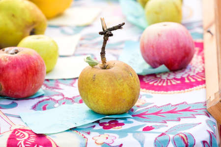 ancient apple on the table along with the other apples Stock Photo