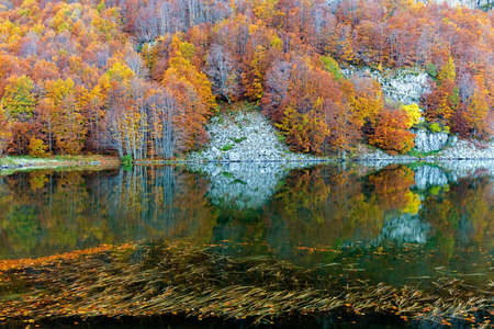 trees in autumn colors reflected in lake