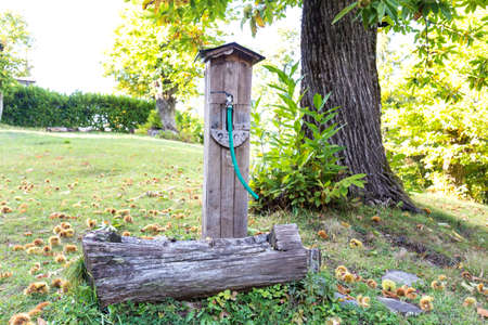 old wooden fountain in the woods