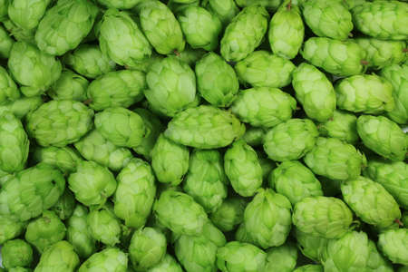 wild hops abstract background photo