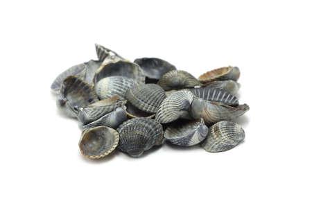 empty sea shells on a white background Stockfoto
