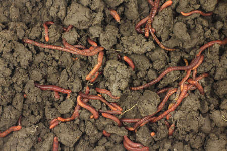 dungy: earthworms in the land of abstract background