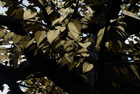gold: Gold leaves