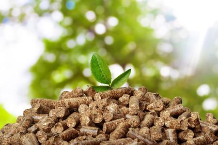 Granulés de bois sur fond vert. Biocarburants.