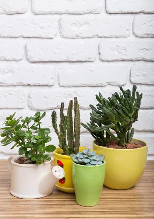 House plants. Succulents