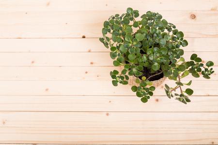 Succulenten, huisplanten in potten Stockfoto