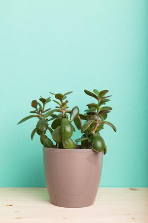 Succulents, house plants in pots