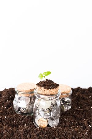 árboles que crecen en las monedas tarro