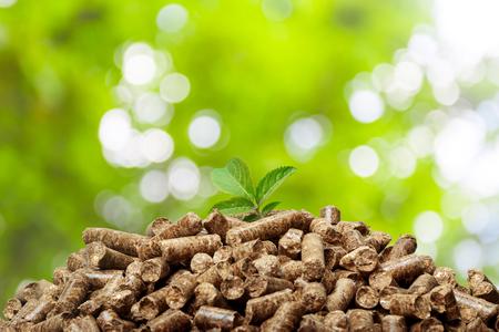 biomasa: Wood pellets on a green background. Biofuels.