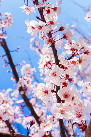 春の花咲く 写真素材