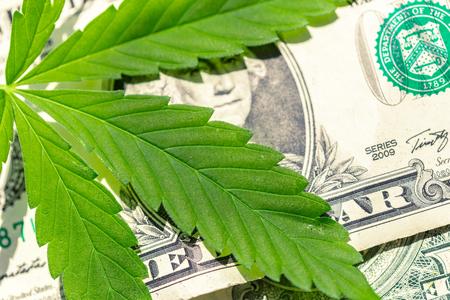 Foglia di cannabis e soldi Archivio Fotografico - 87665424