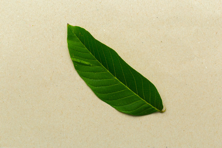 Fresh green leaves closeup shot Stock Photo