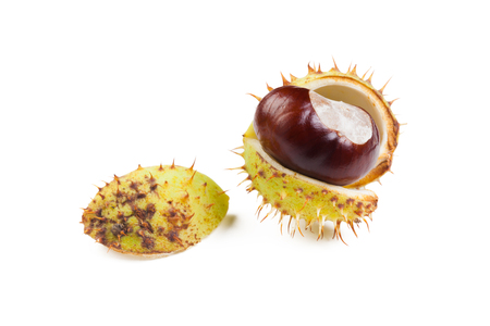 chestnut on a white background Stock Photo