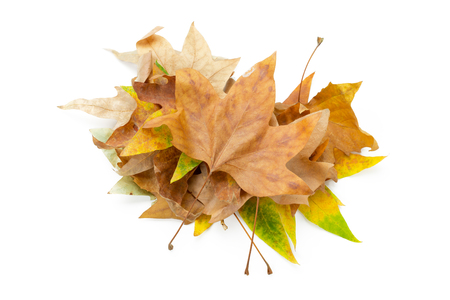 colorful autumn leaves isolated on white background