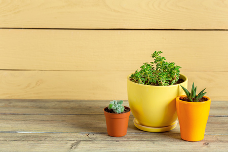 Succulent plants grouped on table Stockfoto