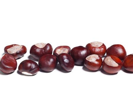 chestnut on a white background Фото со стока