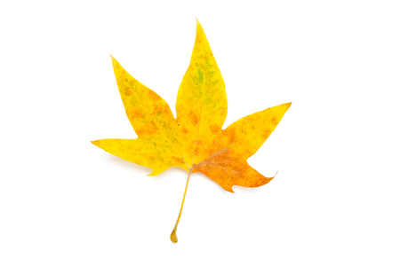 Autumn Leaves isolated on white Stock Photo
