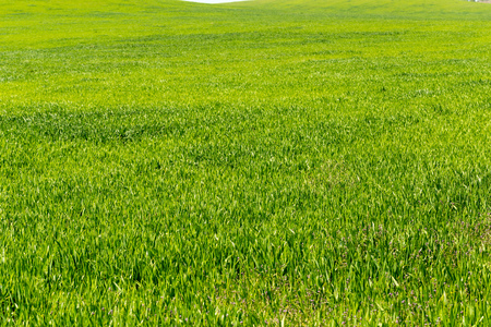 beautiful Green field