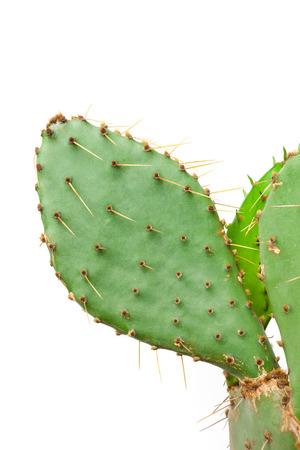 Cactus plant isolated on white background