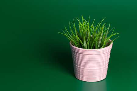 Decorative grass in flowerpot Stockfoto