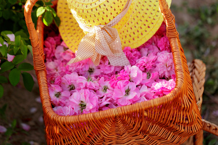 Basket with flower from pink oil roses. 免版税图像