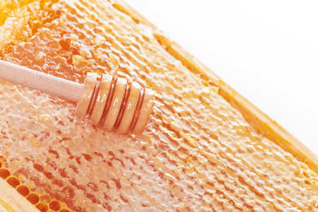 Fresh honeycombs on white background