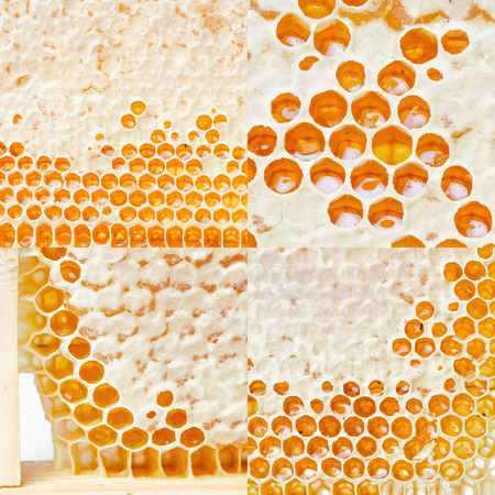 Honeycombs with honey. Natural background.