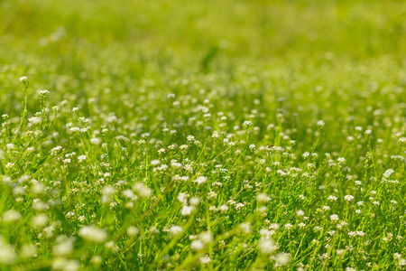 Fresh green spring grass in the morning background Stock Photo