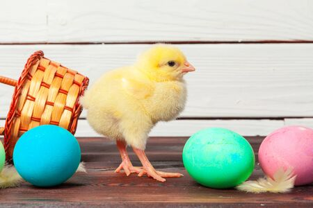 small chick with easter eggs Banco de Imagens