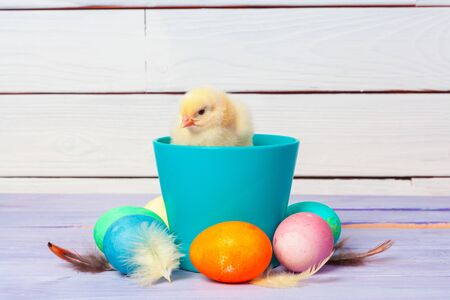 chick with easter eggs on wooden table. Creative photo. Zdjęcie Seryjne