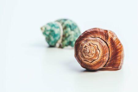shells isolated on white background. creative photo. Stock Photo