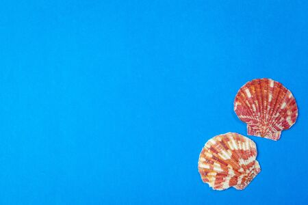 Flat lay. Top view. Frame of shells of various kinds on a blue background. creative photo. Фото со стока