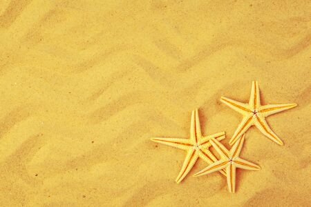 Seashells on sand. Sea summer vacation background. creative photo.