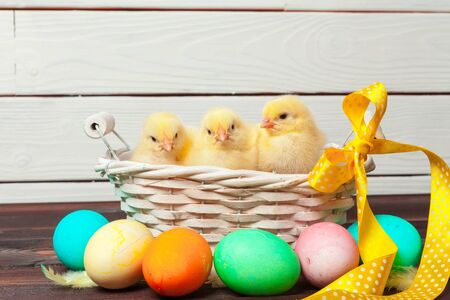 chick with easter eggs on wooden table. Creative photo.
