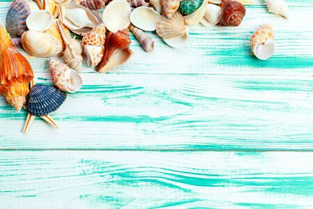 Different sea shells on color wooden background. creative photo.
