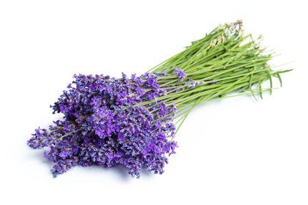 Lavender flowers on white background Foto de archivo