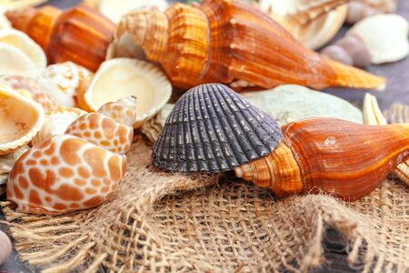 Sea shells nature background. creative photo. 写真素材
