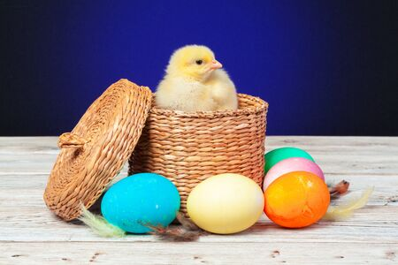 chick with easter eggs on wooden table. Creative photo. Stockfoto