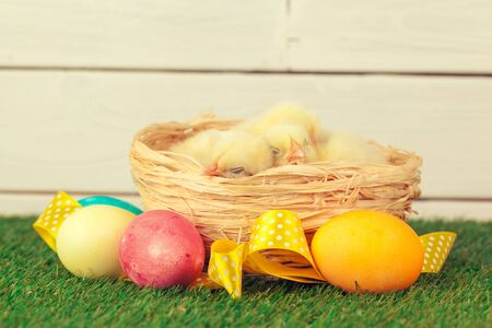 Easter eggs and chickens on green grass.