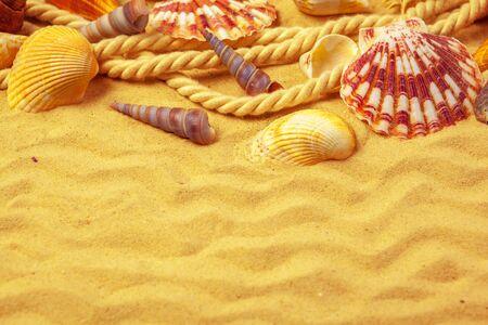 Seashells on sand. Sea summer vacation background creative photo.