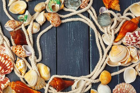 seashells on wooden background. close up. Creative photo.