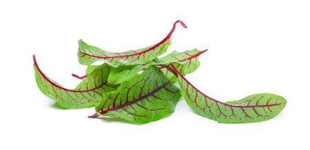 fresh beet leaf isolated on white background. Close up.