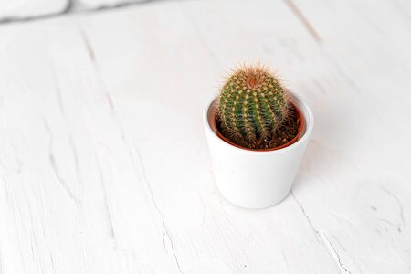 Round cactus in white pot on white wooden table, close up 版權商用圖片