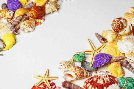 Composition of exotic seashells. Macro photo. Close up.